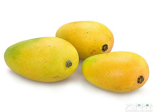 芒果 拉丁名:mangifera